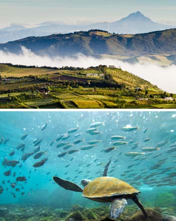 the andes mountains and sea turtles