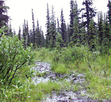 picture of a wet trail in alaska
